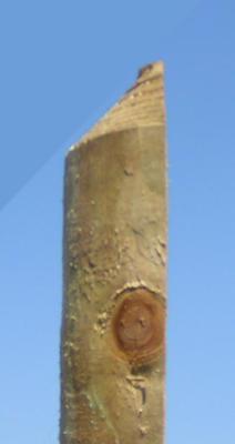 Zaune Zaunlatte Halbrund 1 25 M Erfurtholz